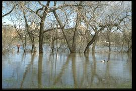 1997 flood - The Forks - view of St. Boniface across river
