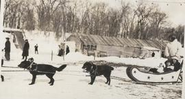 Dog sled at River Park