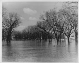 Flood water over street in the vicinity of Shaarey Zedek Synagogue, 1950 Flood