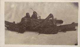 Grasshoppers, 1875