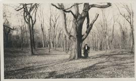 Woman standing beside large tree in Kildonan Park